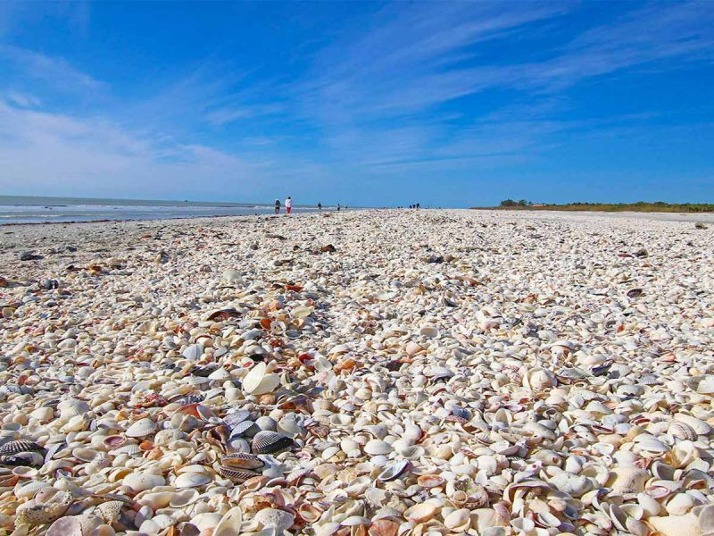Clamshell Condos beach seashells