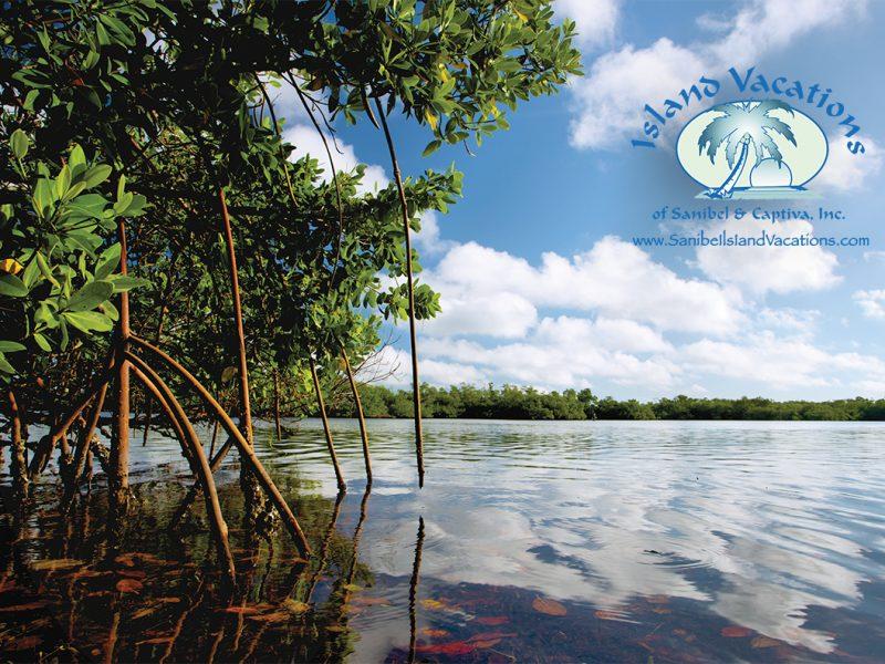 Mangroves logo