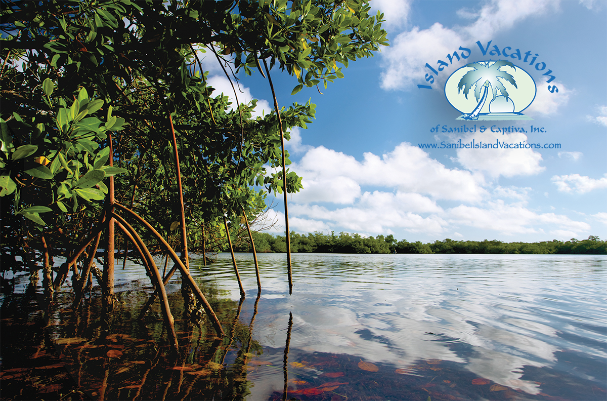 Mangroves logo
